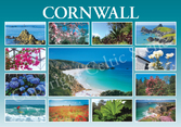 Cornwall Exotic 13